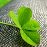 four-leaved-clover-2-1310135